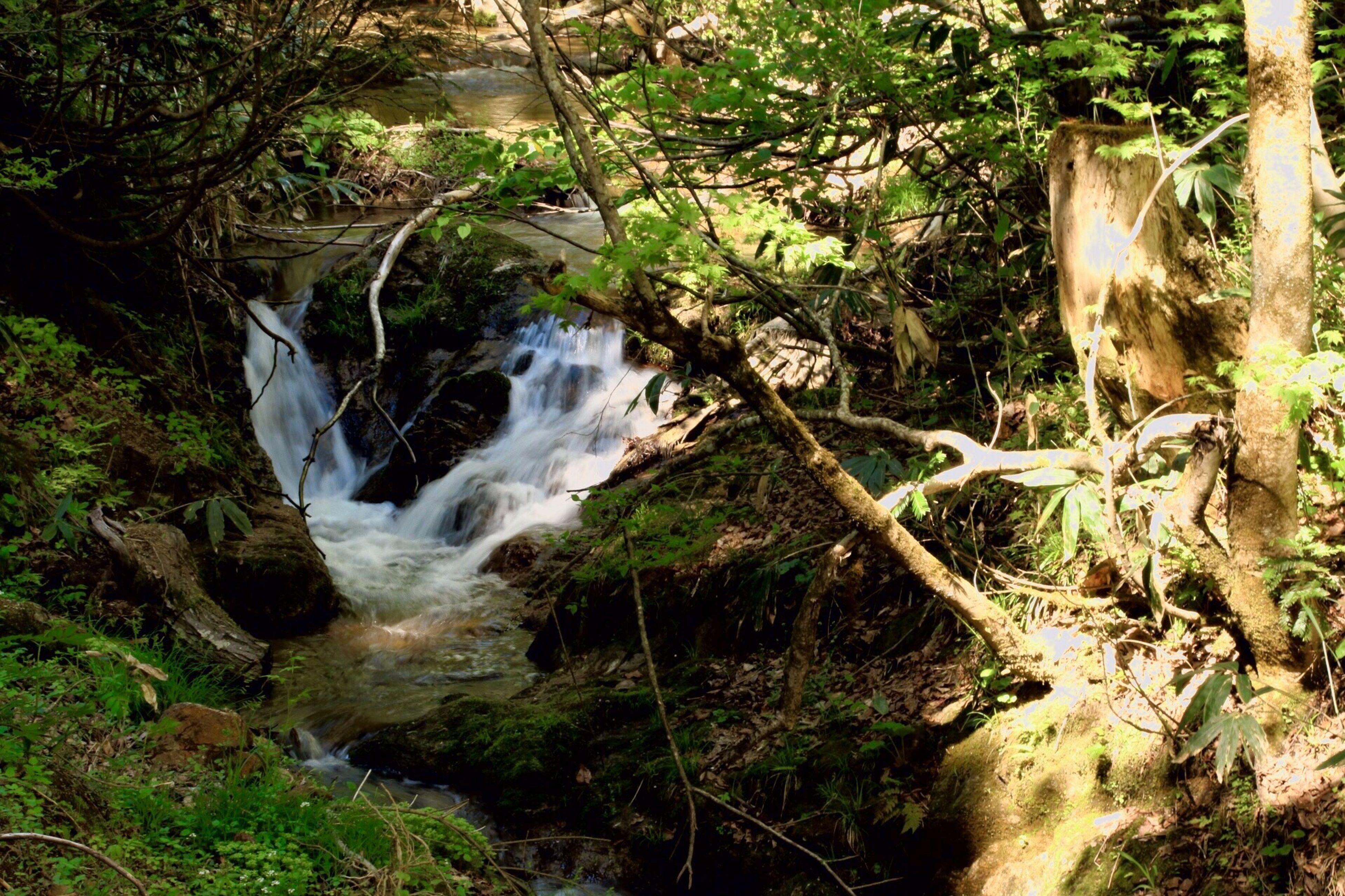 山形県 長井市 伊佐沢 に、気持ちの良い 渓流 があるのを知りました。 最上川 に流れ込む 支流 なのかな。 Canon EOS 70d Sigma 18_300mm Photo Mountain Stream
