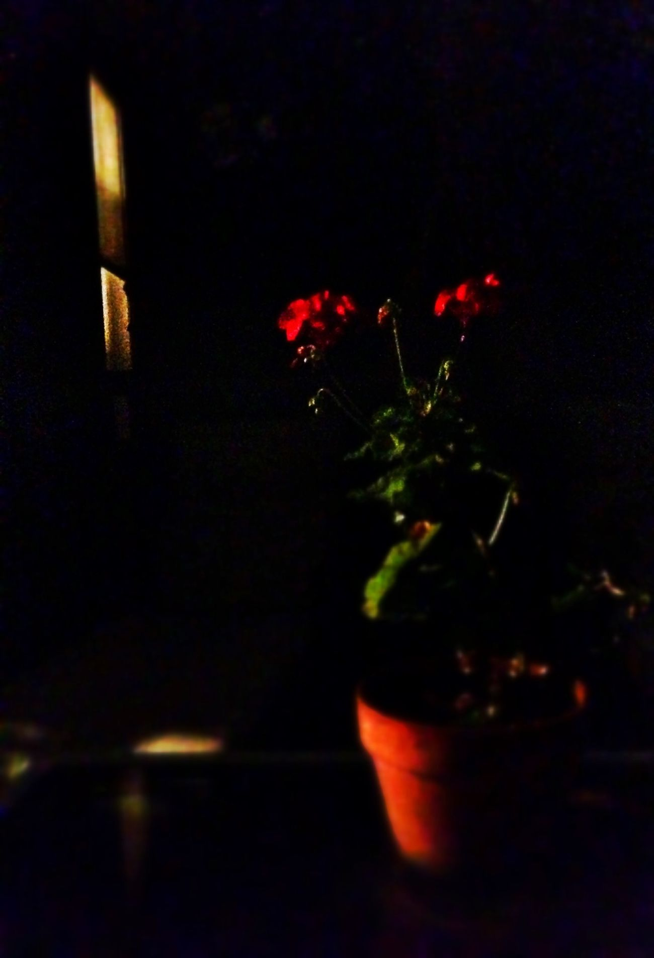 night flowers. Night Observing Death Dark