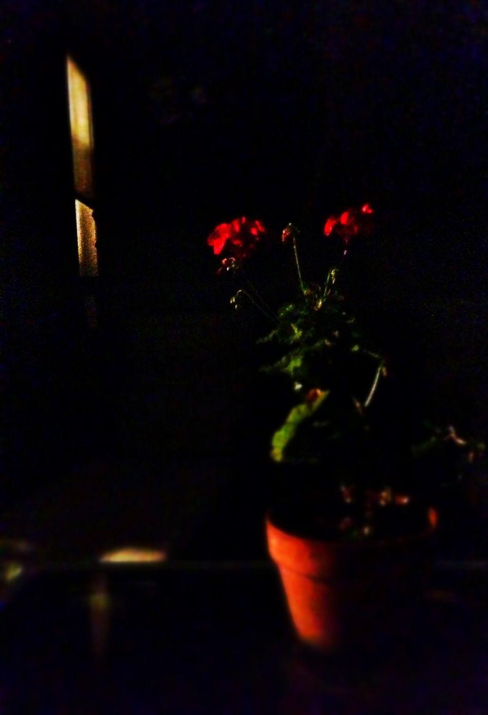 night flowers. Night Observing Death Dark