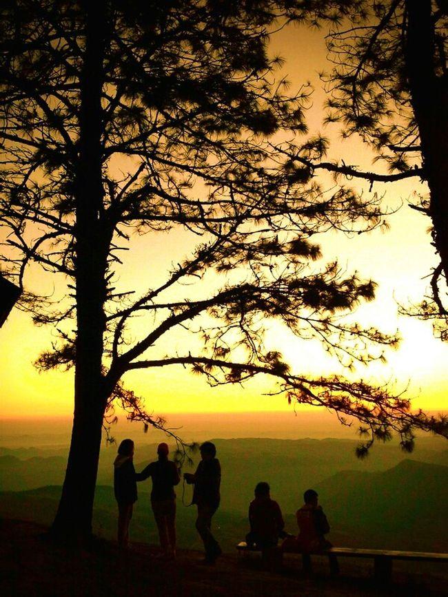 Nature Trees Thailand Thailand_allshots