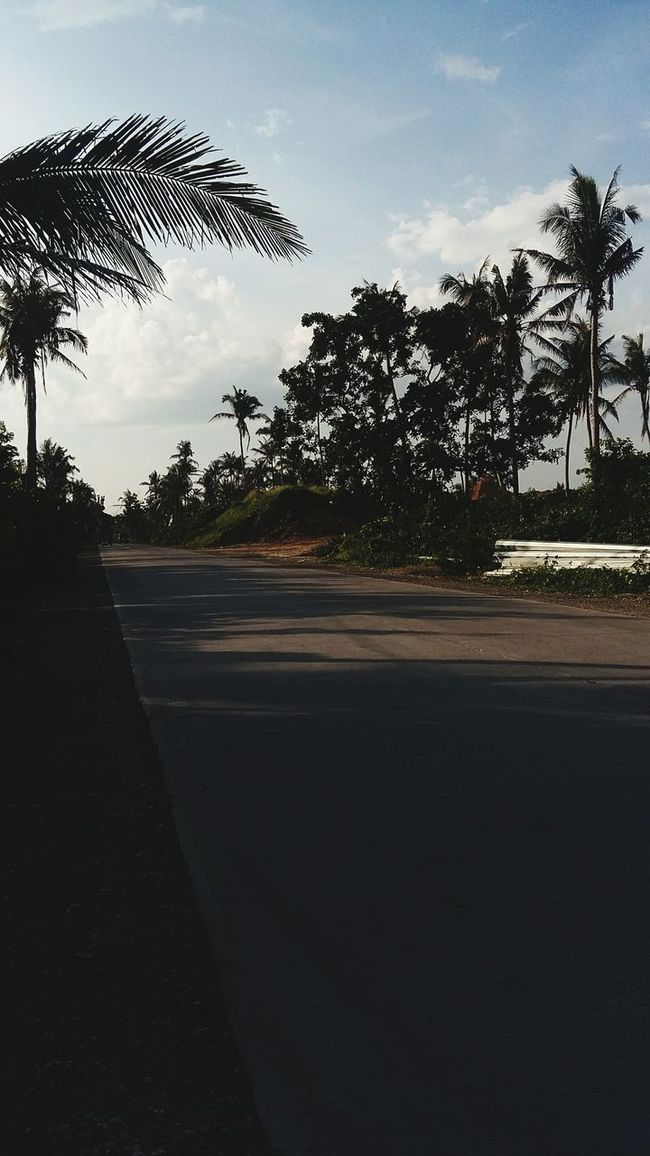 Onourwayhome Provincetown where traffic is not a problem Mobilephotography Coconut Trees ThePhilippineroad