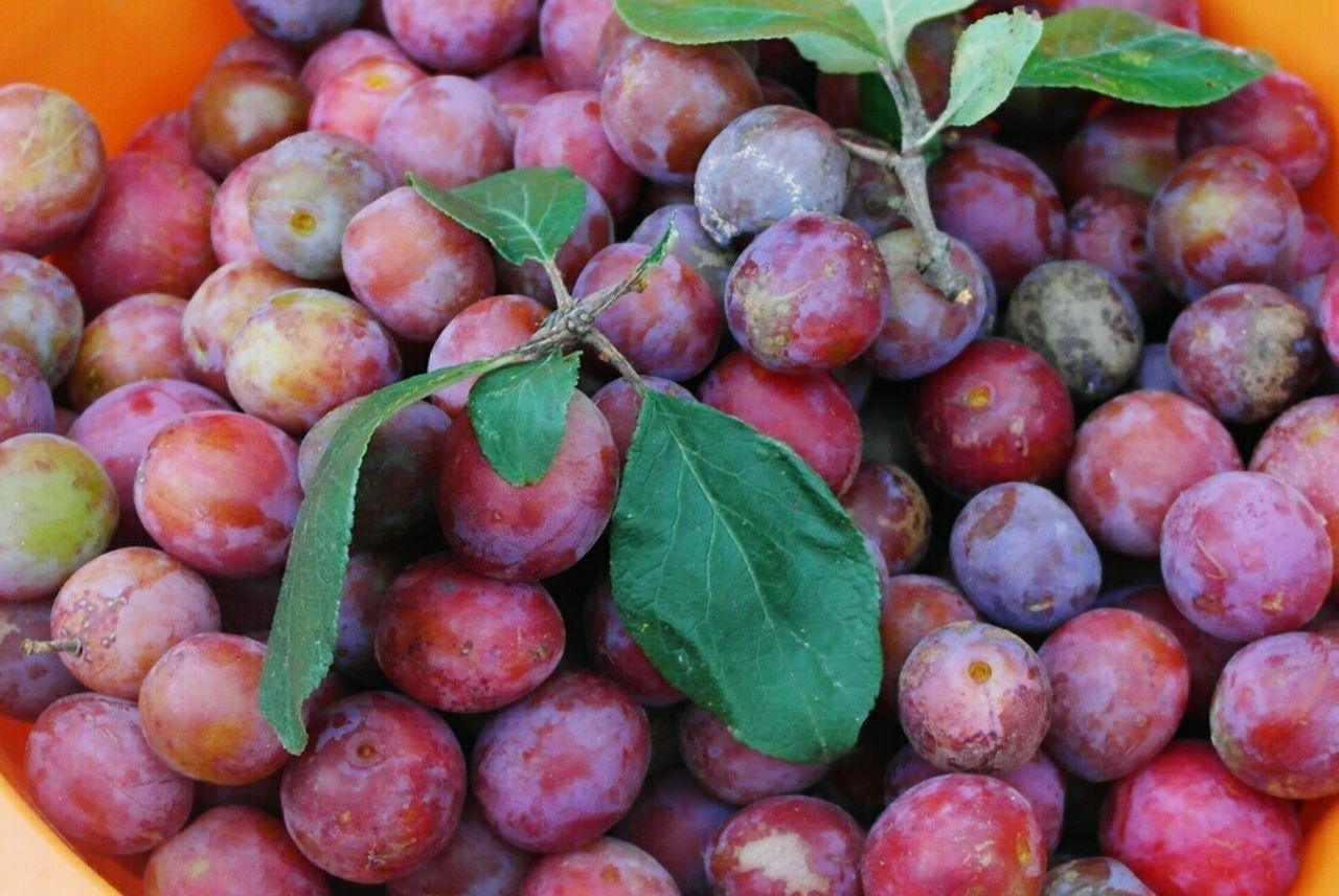 Close-Up Of Plums In Container