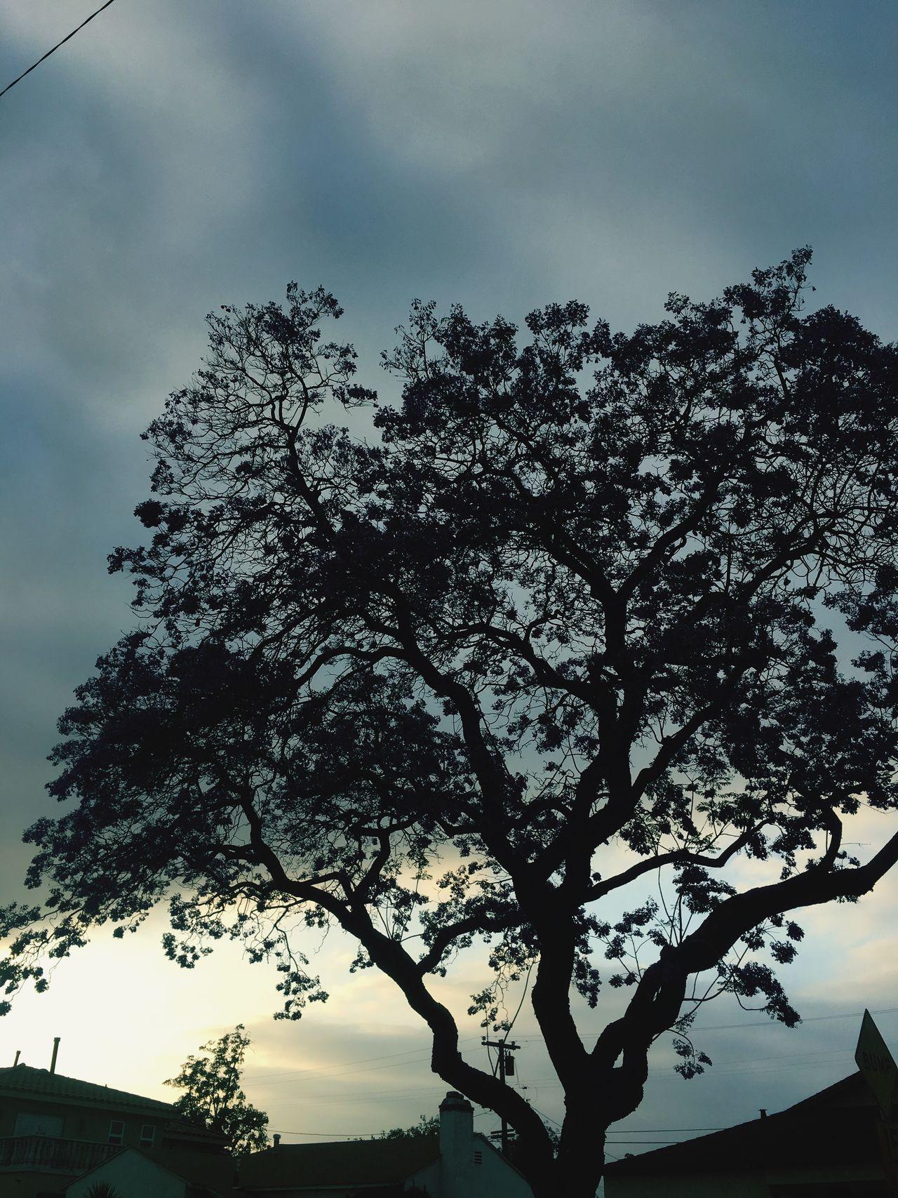 Nature Trees So Cal Compton