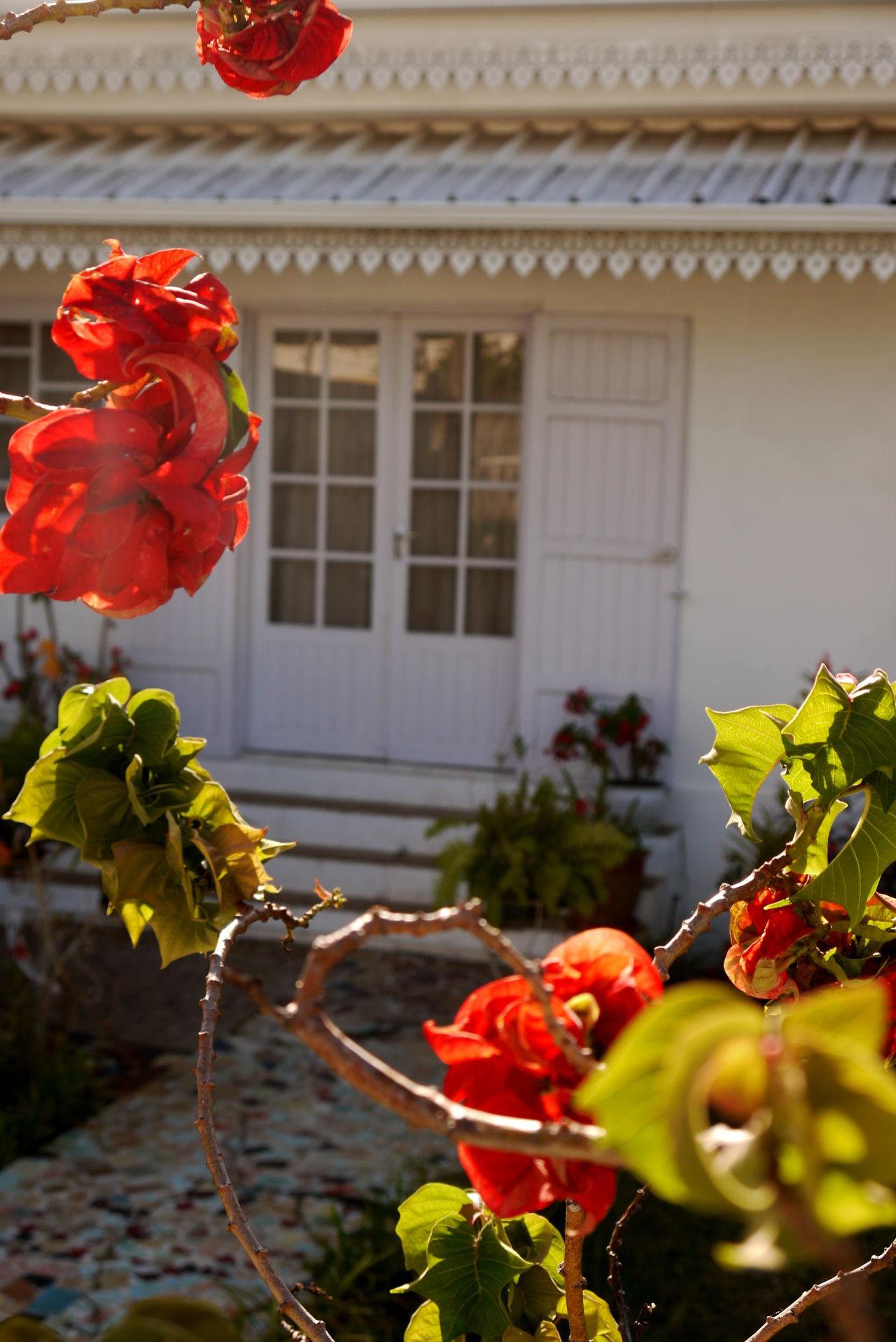 Case Créole Flowers,Plants & Garden Creole House