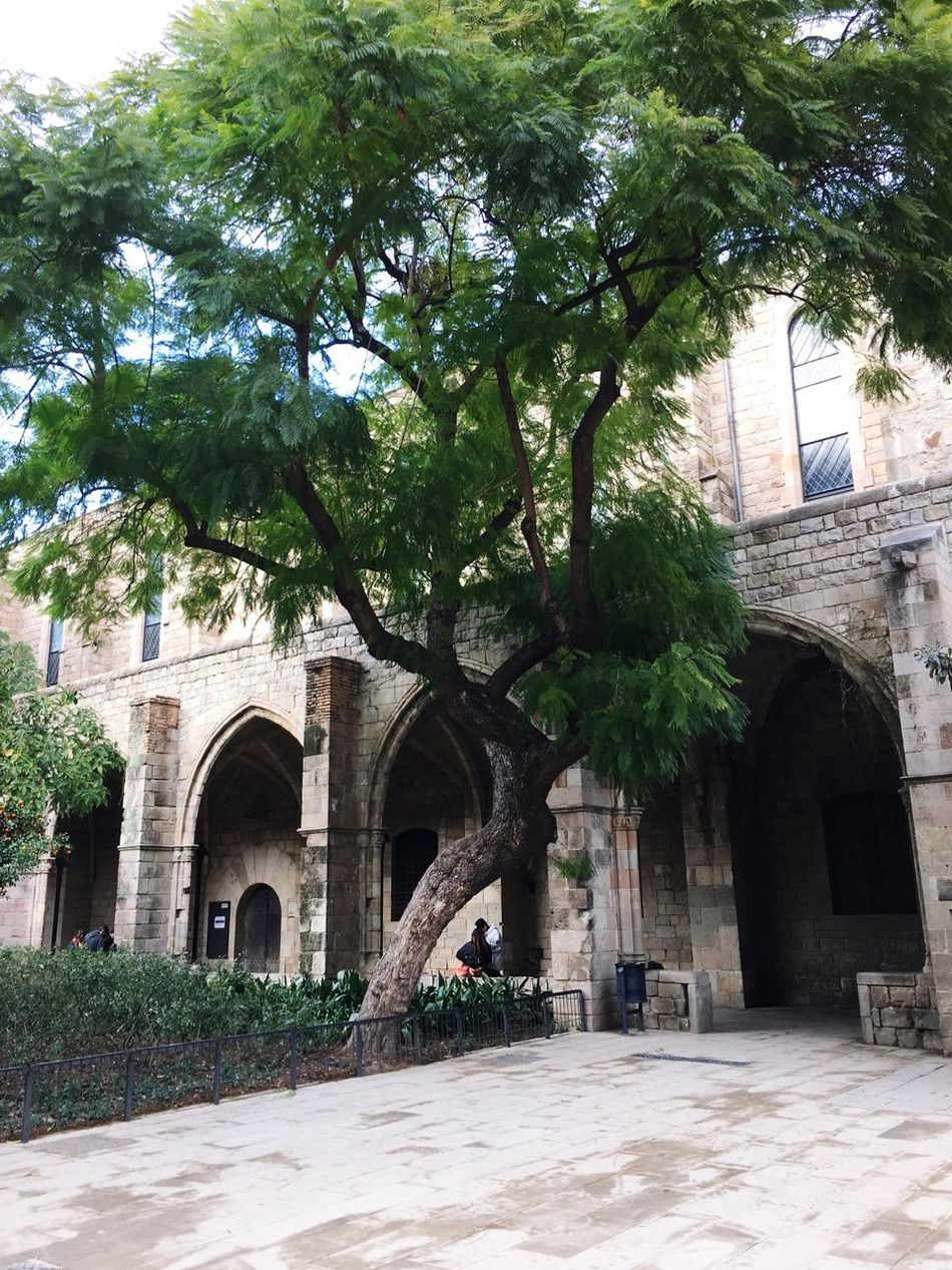 History Courtyard View Courtyard  Barcelona Catalunya City Life Hidden Places Old Hospital Gaudi