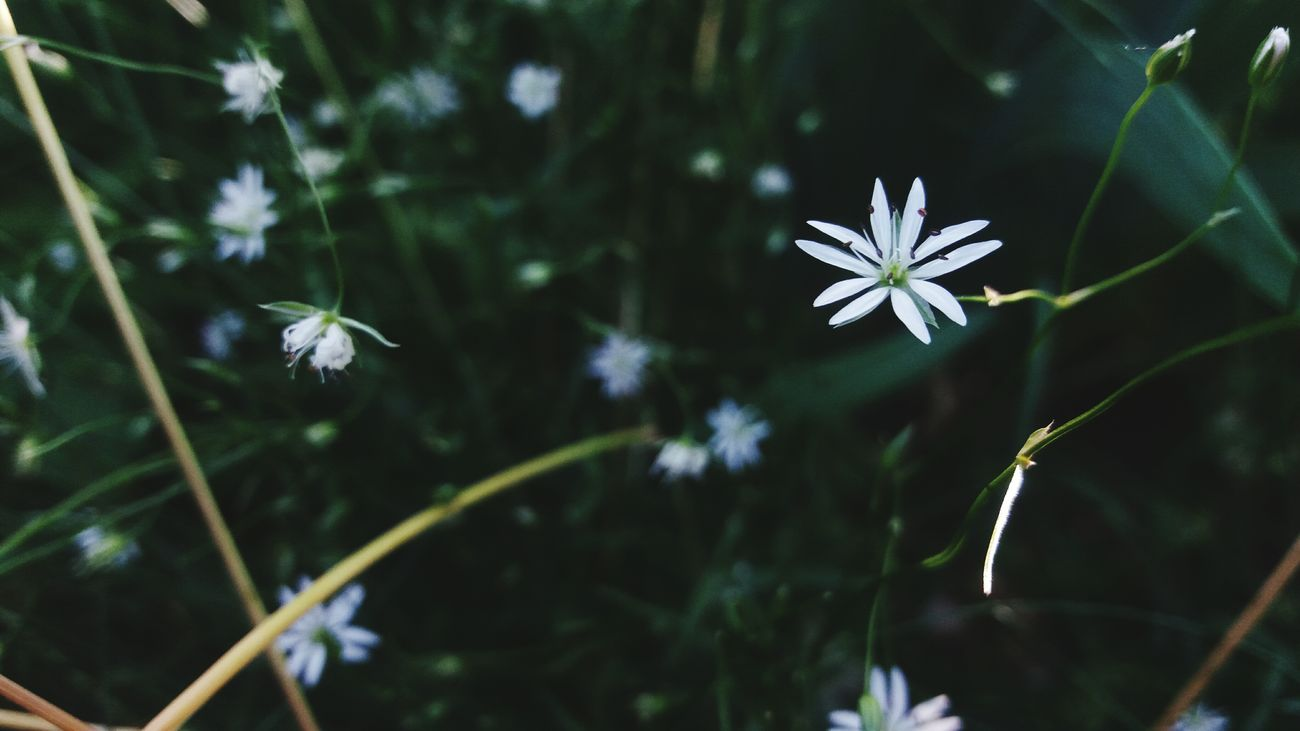 Flower Nature Fragility Beauty Day Multi Colored Botanical Garden Spring Macro Beauty Botany Flower White