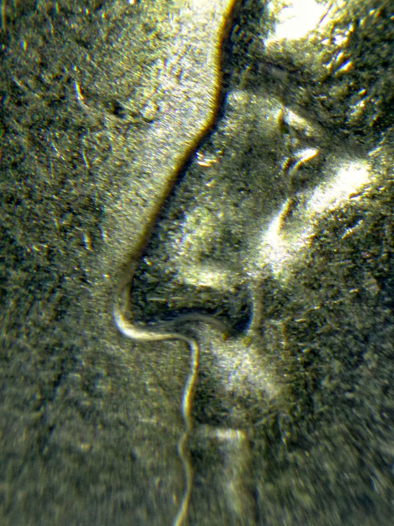 The Portrait of Washington NaturePresident Coin Quarter  Microscope Metal Close-up EyeEmNewHere Backgrounds EyeEm Best Shots No People Faces Of The Money Under The Microscope