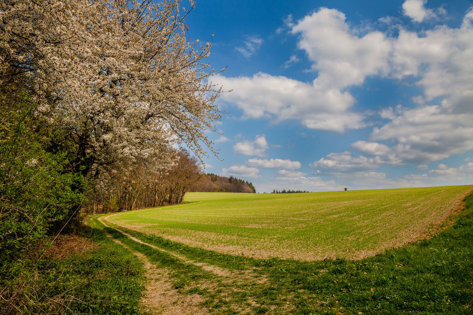 Agriculture Beauty In Nature Cloud Day Field Field Grass Green Landscape Nature No People Outdoors Road Rural Scene Scenics Sky Spring Summer Sunset Tranquil Scene Tranquility Tree Tree