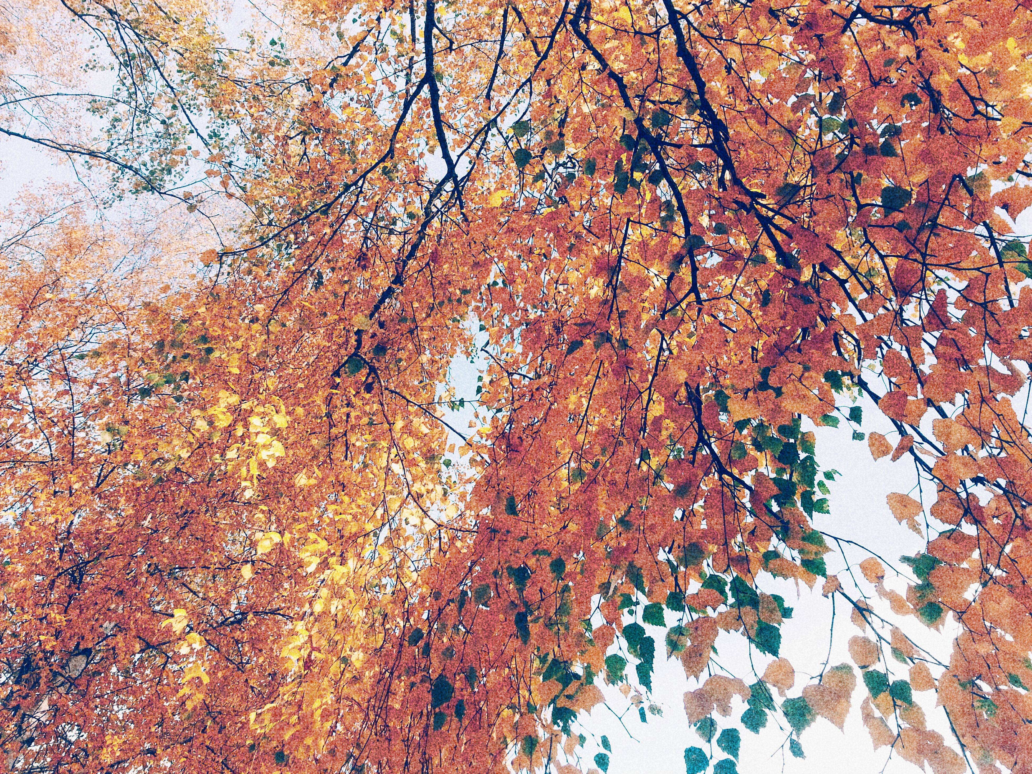 tree, branch, autumn, growth, full frame, low angle view, tree trunk, nature, backgrounds, leaf, change, tranquility, beauty in nature, season, day, no people, textured, outdoors, close-up, wall - building feature