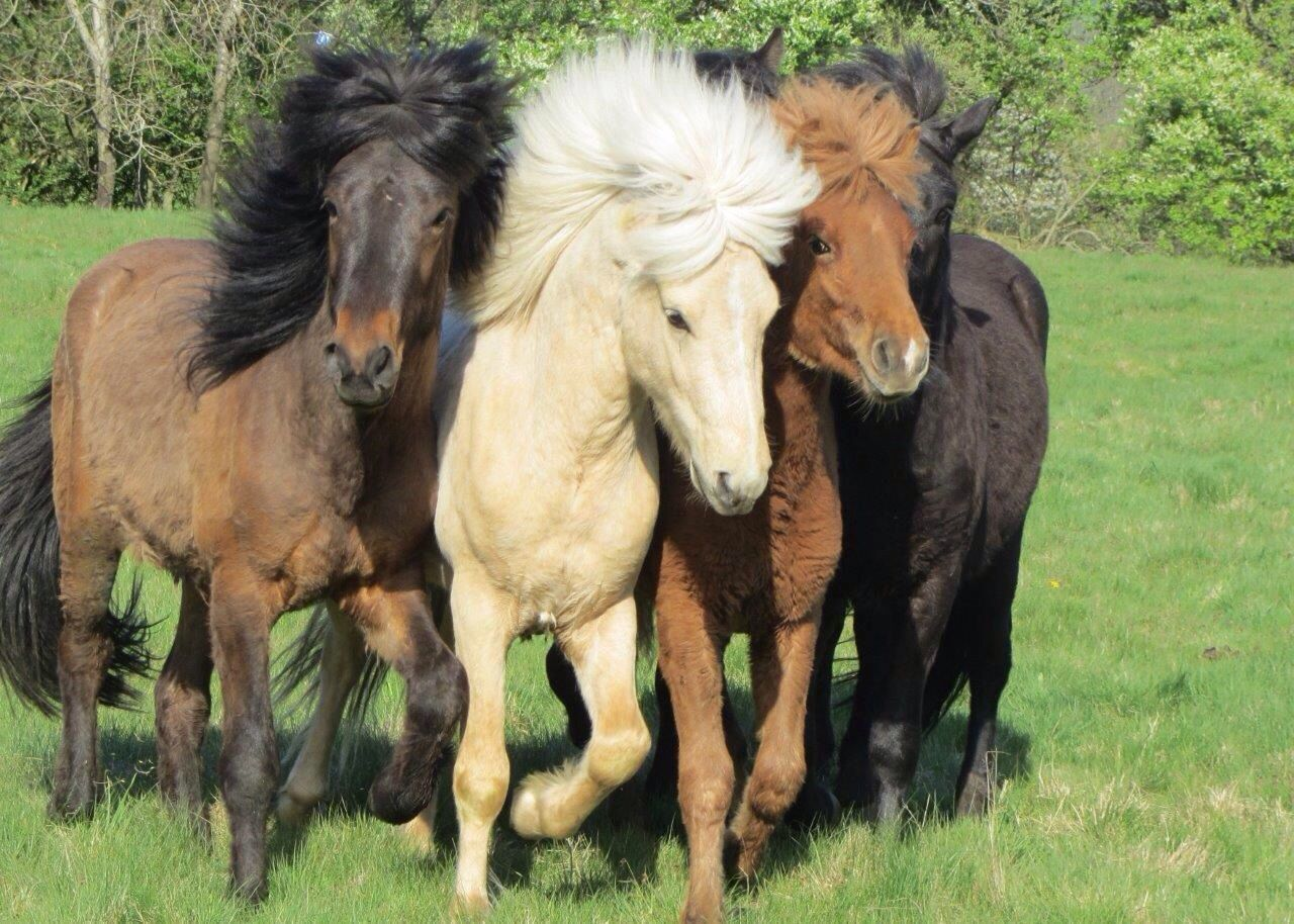 Beautiful stock photos of pony, Animal Hair, Animal Themes, Day, Domestic Animals