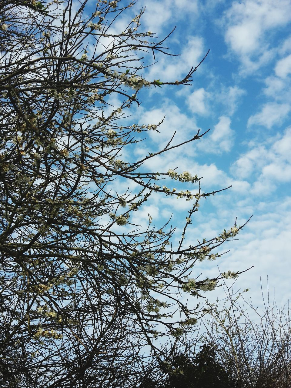 sky, tree, nature, branch, low angle view, day, outdoors, no people, growth, beauty in nature, cloud - sky, plant