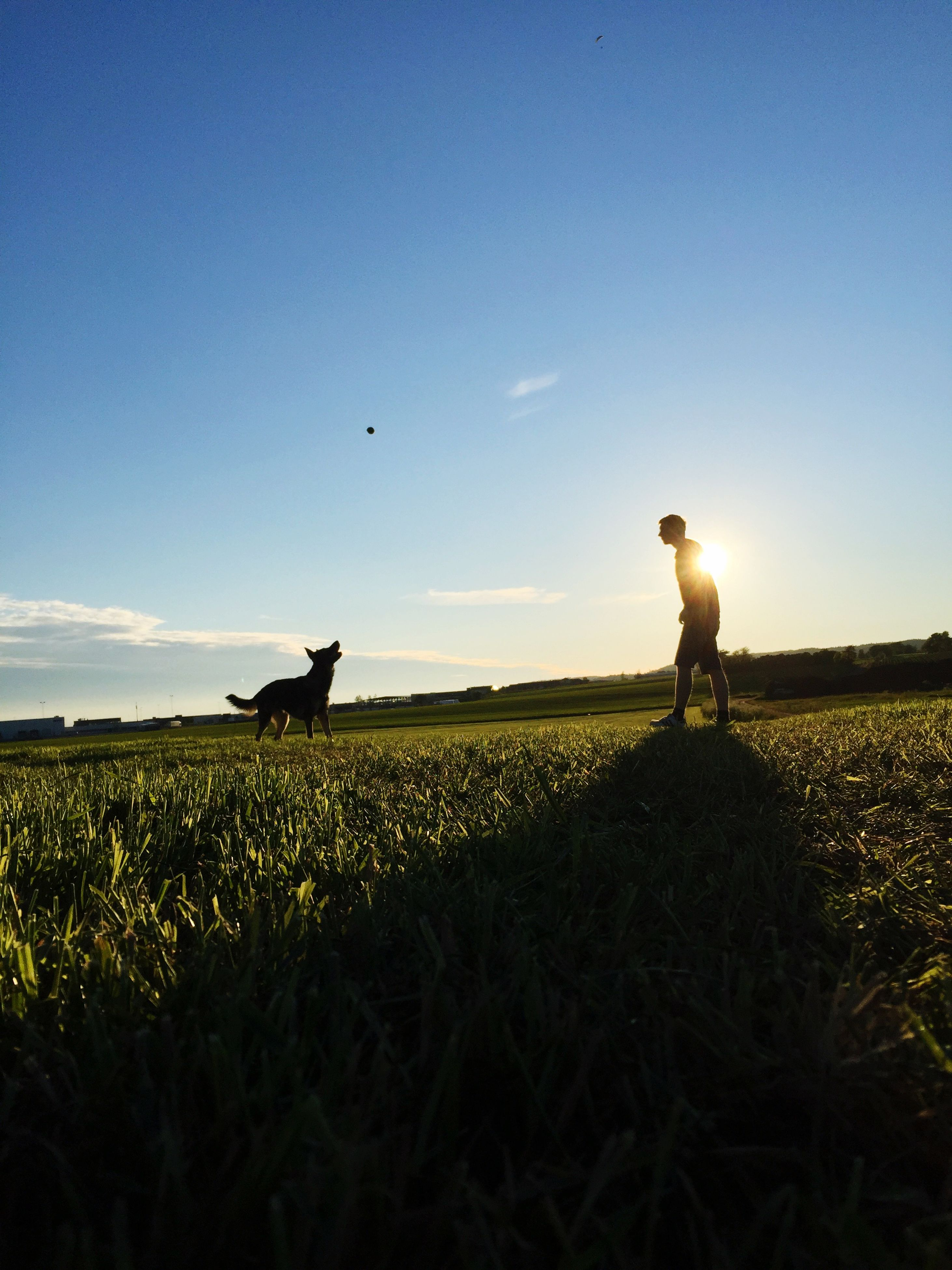 field, landscape, rural scene, sky, agriculture, grass, tranquility, tranquil scene, beauty in nature, scenics, men, nature, copy space, clear sky, farm, full length, horizon over land, rear view, domestic animals