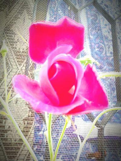 From my garden First Eyeem Photo
