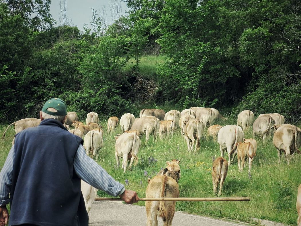 Snikttt Cowboy Nature Cow Dogs Bretui Lleida Peace Spring Mountain Breaktime
