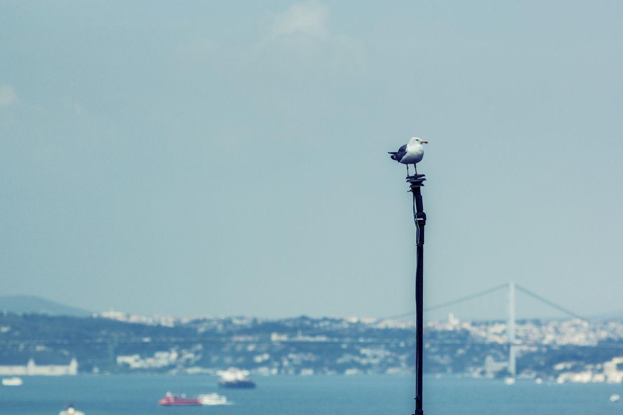 Istanbul Seagull Sea Bridge City Turkey Seagulls