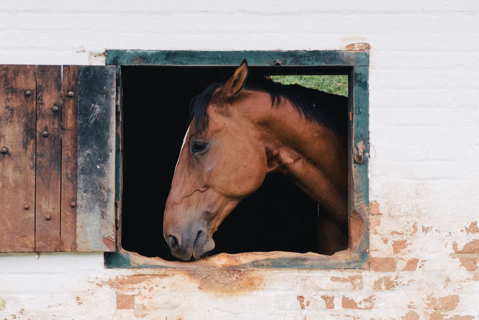 Beautiful stock photos of horse,  Architecture,  Brazil,  Brown,  Building Exterior