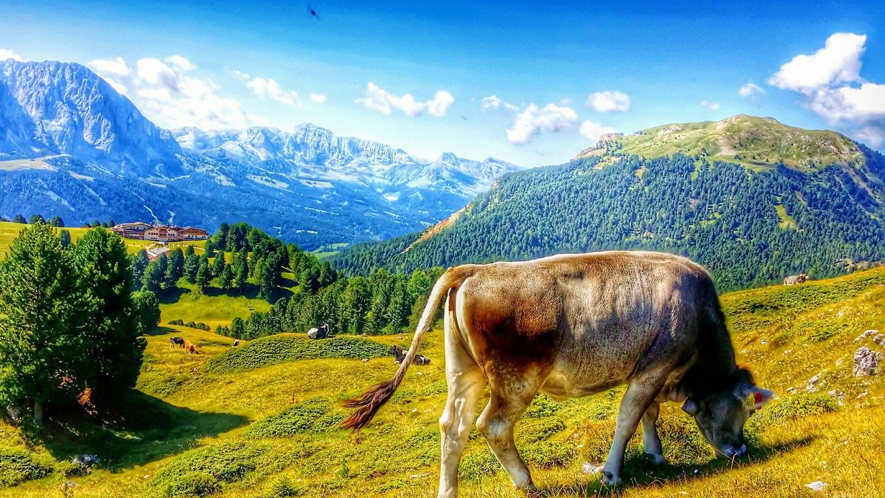Pascolo di montagna Mountain Nature Mountain Range Scenics Animal Themes Mucca Pascolo