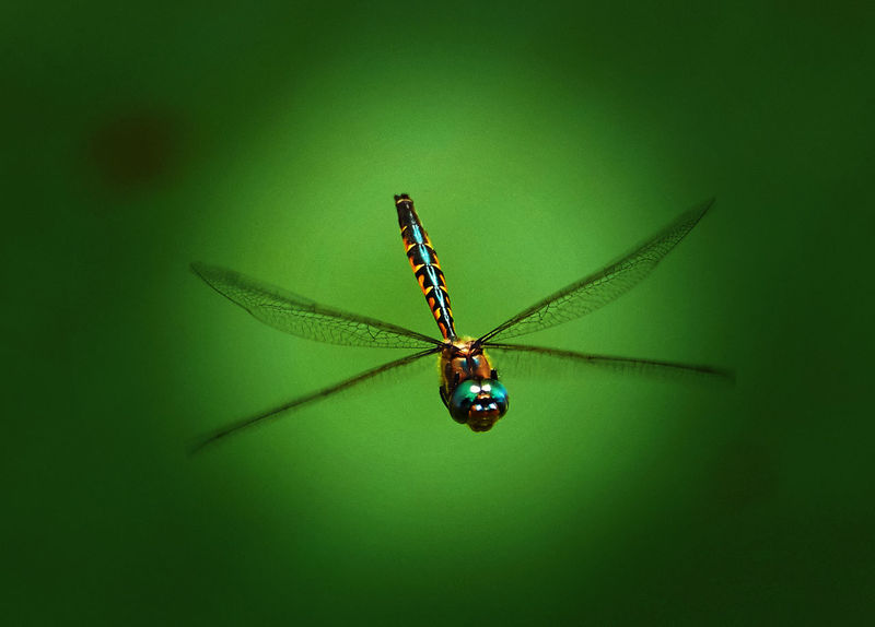 Animal Themes Animal Wildlife Animals In The Wild Beauty In Nature Close-up Day Dragonfly Fragility Green Color Insect Nature No People One Animal Outdoors Spider