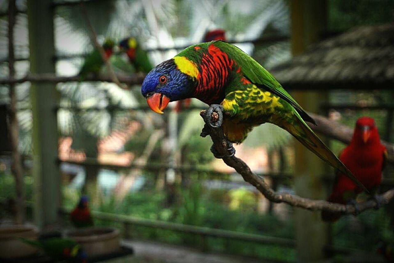 Kuala Lumpur Bird Aviary Parrot Colourful Cheerful Curious Sony Alpha A5100