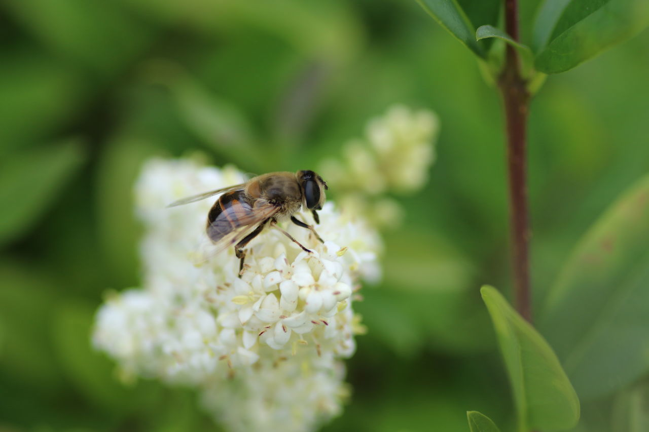 Animal Themes Animal Wildlife Animals In The Wild Beauty In Nature Bee Close-up Day Flower Flower Head Fragility Freshness Green Color Growth Insect Leaf Macro Nature No People One Animal Outdoors Plant Pollination Wildlife