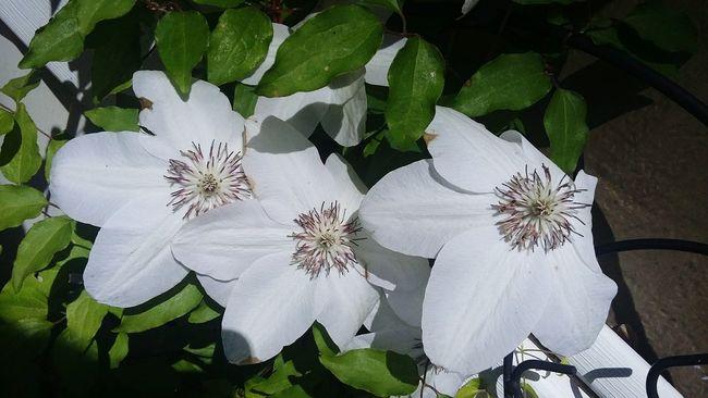 Floweringvine Nature Peace