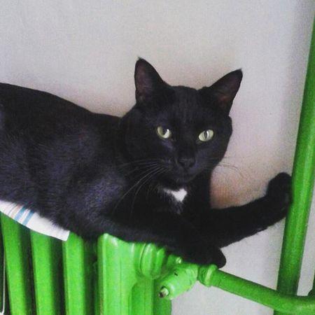 Rocco Douglas Boiler Catoftheday Cataholic Blackcats Instacats Puttanino Catsoninstagram Catsofinstagram Calorifero Catsonradiators