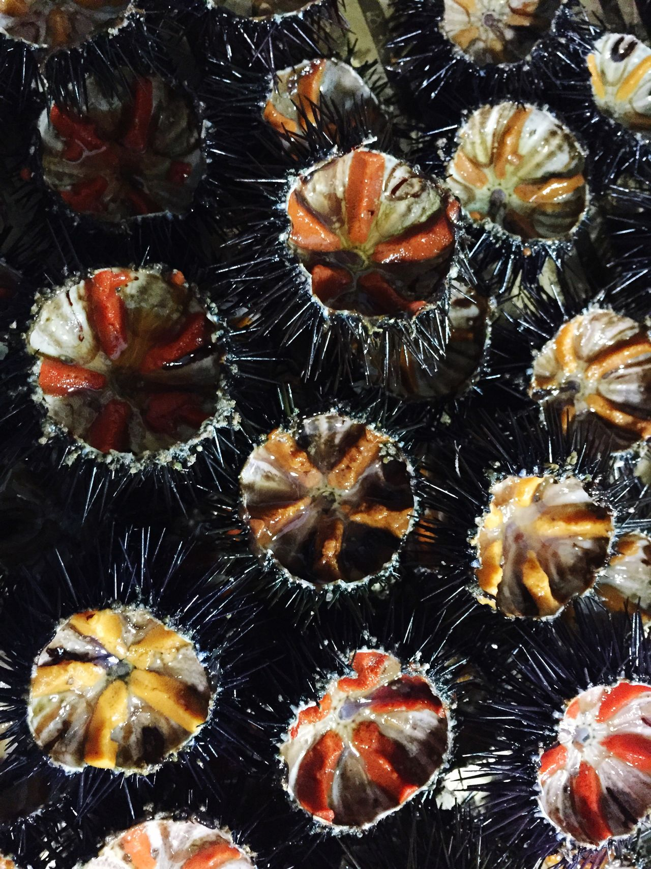 Sea Urchins Contrast Colours Foodphotography Everything In Its Place Pattern Pattern, Texture, Shape And Form Eating Sea Fruits iPhoneography Here Belongs To Me Beautifully Organized