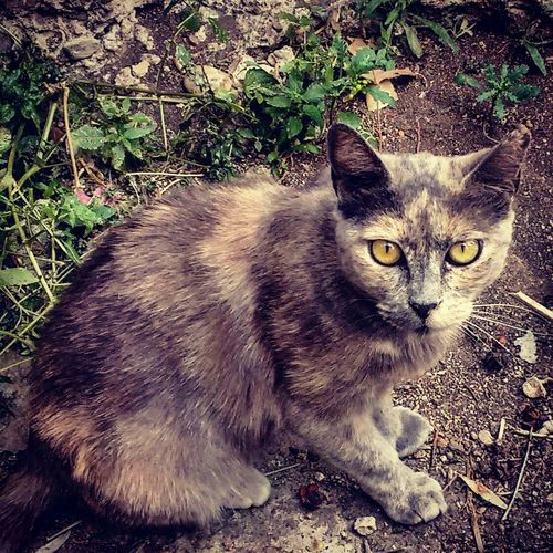 Cat Enjoying Life EyeEm Nature Lover Hello World Nature_collection Thecat