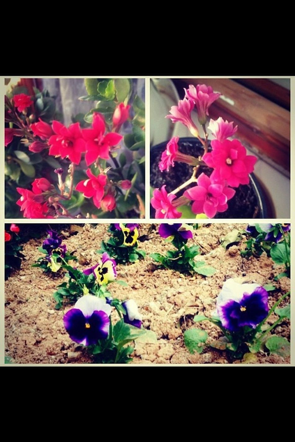 Notfilter Flowers Father Father'sflowers Beauty Colourful Colour Saksı Cute♡ Goodmorning