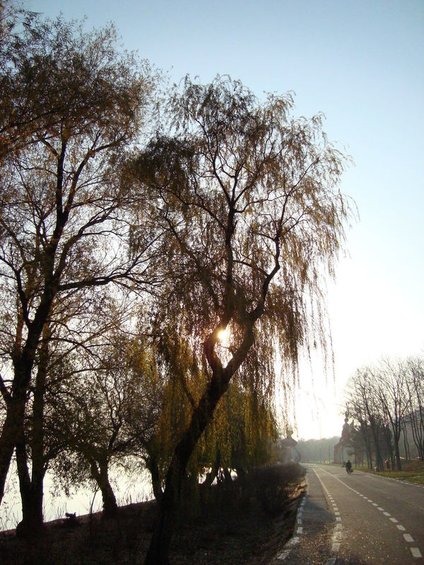 Willow Sun Willow River Bank  Danube River Contre-jour Lens Flare Beauty Of Nature