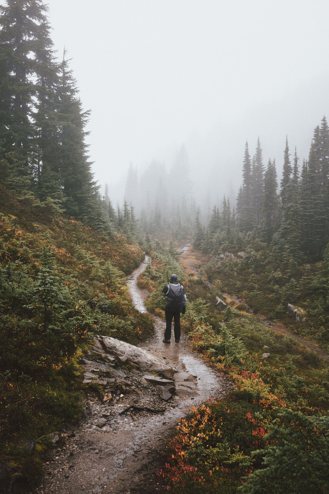Been taking a lot of hazy hikes in alpine meadows recenty Adventure Alpine Hiking Beauty In Nature Cold Temperature Fog Forest Hiking Landscape Nature Nature Outdoors People Scenics Washington State