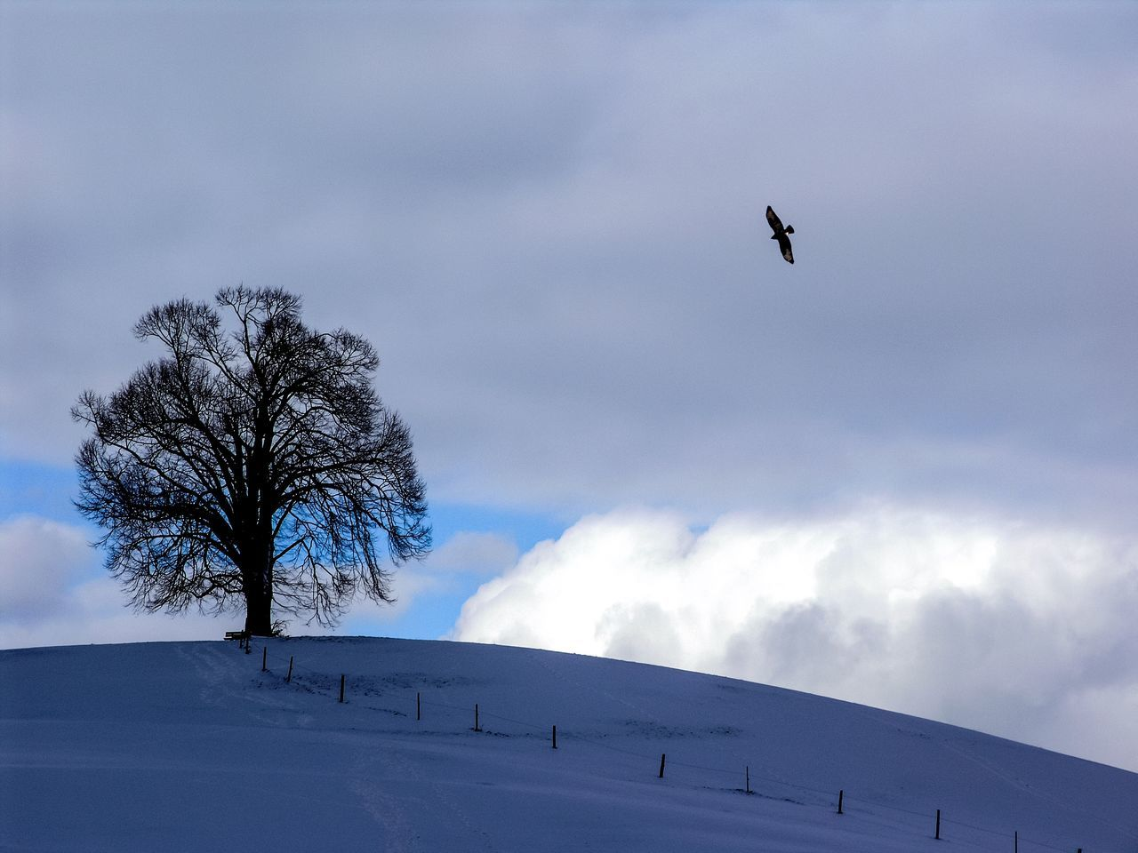 WeekOnEyeEm EyeEmBestPics Eyem Nature Lovers  Bird Flying Wintertime Birds In Flight Lonely Tree Blue Sky Free Bird Favourite Tree Winter Snow Weather Cold Temperature Nature Low Angle View Outdoors Beauty In Nature Bird No People Tree Sky Animal Themes