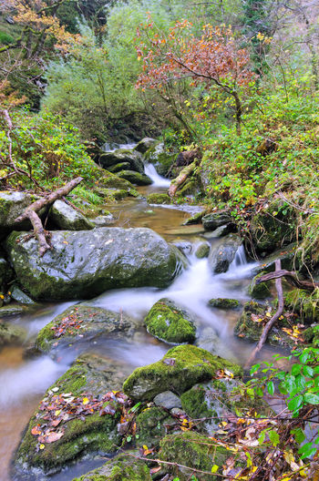 Autumn Beauty In Nature Blurred Motion Day Forest Landscape Long Exposure Motion Nature No People Outdoors Rock - Object Scenics Somerset Stream Tranquil Scene Tranquility Tree Water Waterfall Watersmeet