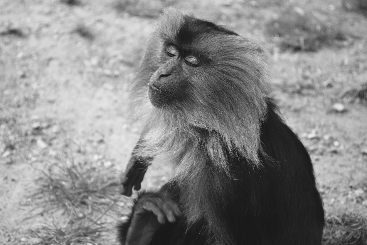 Little Monkey One Animal Ape Animal Wildlife Monkey Animals In The Wild Mammal Outdoors Nature No People Day Animal Themes Close-up The Great Outdoors - 2017 EyeEm Awards EyeEmNewHere Sunbathing☀ Sunny Nature Beauty In Nature