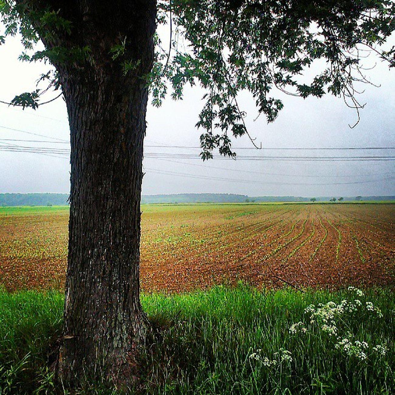 Hungary Tree Zala