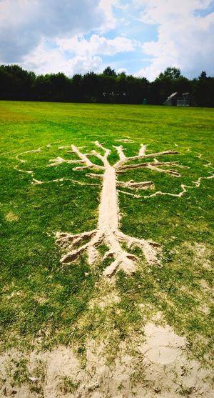 Sand Tree Sandtree