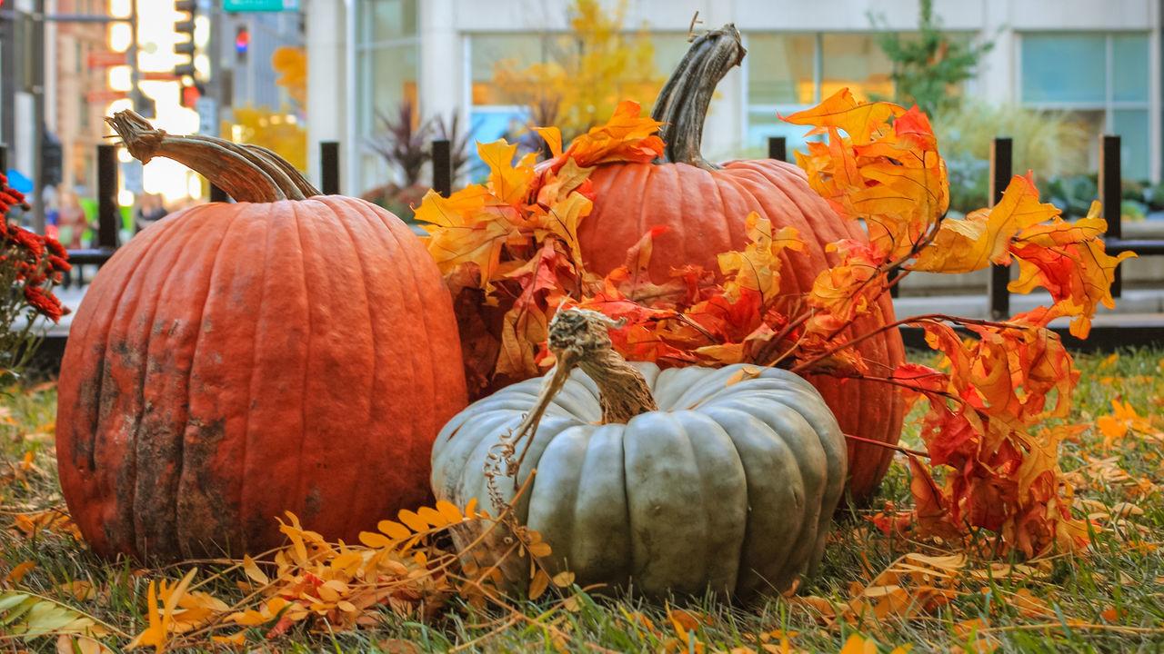 Close-Up Of Pumpkins On Grassy Field
