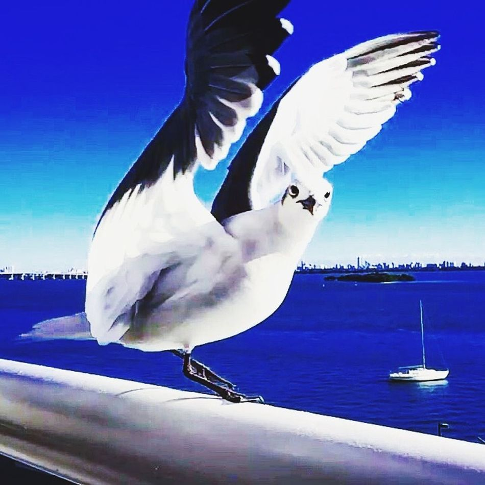 Miami's BirdFLORIDA 🇺🇸☀️ Usa #igersusa #ig_unitedstates #rockin_shotz #just_unitedstates #insta_crew #gf_usa #nature #rsa_rural #instagramhub #allshots_#world_shooters #insta_america #ig_captures #centralfeed #webstagram #ic_landscapes #wonderful_america #storyofamerica #instagra All_shots #Portrait #Vscocamphotos #Likesforlikes #Photographs #Photographylovers #TopLikeTags #Outdoorphotography #Likesreturned #Silhouette #Likeforlike #Art #Contrast #Landscaped #TagStaGram #love #friends #tagstagram #photooftheday #selfie #amazing #f Tasteofnature #awesome #best #cool #stephiscool #top #topnewfollowers #fantastico #instagram #sound #soundhound #applemusic #digital #model #beautiful #photos #photography #amazing #usa #socialmedia #social #nature #street #streetart #instagram #video #vi HDR Photography Miami Hdr_Collection EyeEm EyeEm Gallery EyeEmBestPics