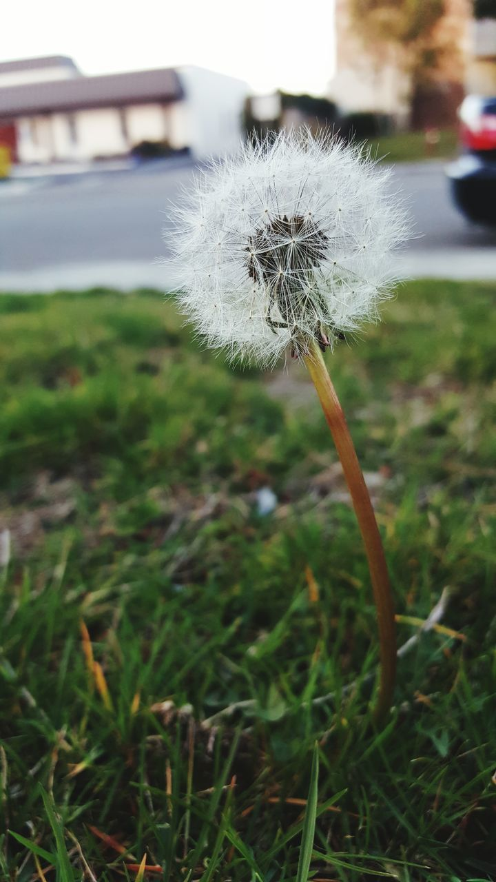 flower, fragility, nature, dandelion, focus on foreground, growth, outdoors, beauty in nature, white color, softness, close-up, day, freshness, no people, plant, flower head, grass