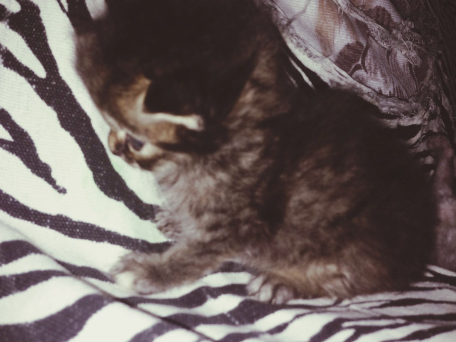 My tiger baby Cat Lovers Kuching Cats Lovers