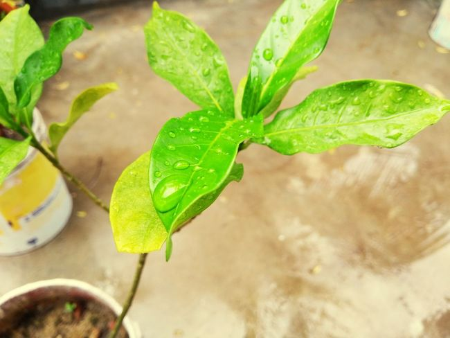 Leaf Plant Green Color Close-up Water Growth Nature No People Social Issues Day Freshness Outdoors Mojito Let's Go. Together.