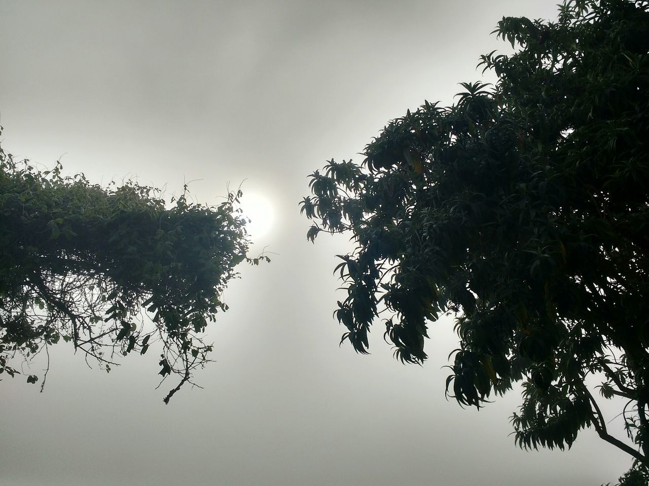tree, nature, beauty in nature, growth, no people, low angle view, sky, tranquility, outdoors, tranquil scene, branch, day, scenics, leaf, plant, clear sky