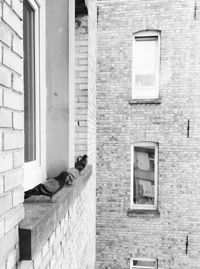 Pigeons Waiting for food Cityscapes Birds Brick Hanging Out Nature On Your Doorstep Urban Nature Open Edit Monochrome