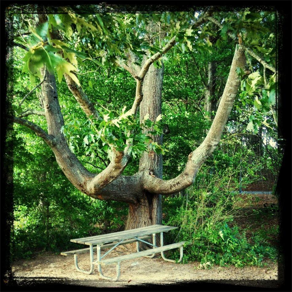 Beautiful tree I saw on my walk.