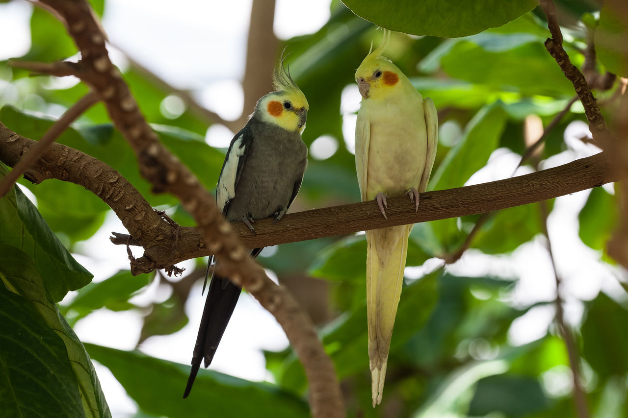 bird, perching, animal themes, focus on foreground, branch, animals in the wild, animal wildlife, tree, no people, day, nature, one animal, close-up, outdoors, beauty in nature
