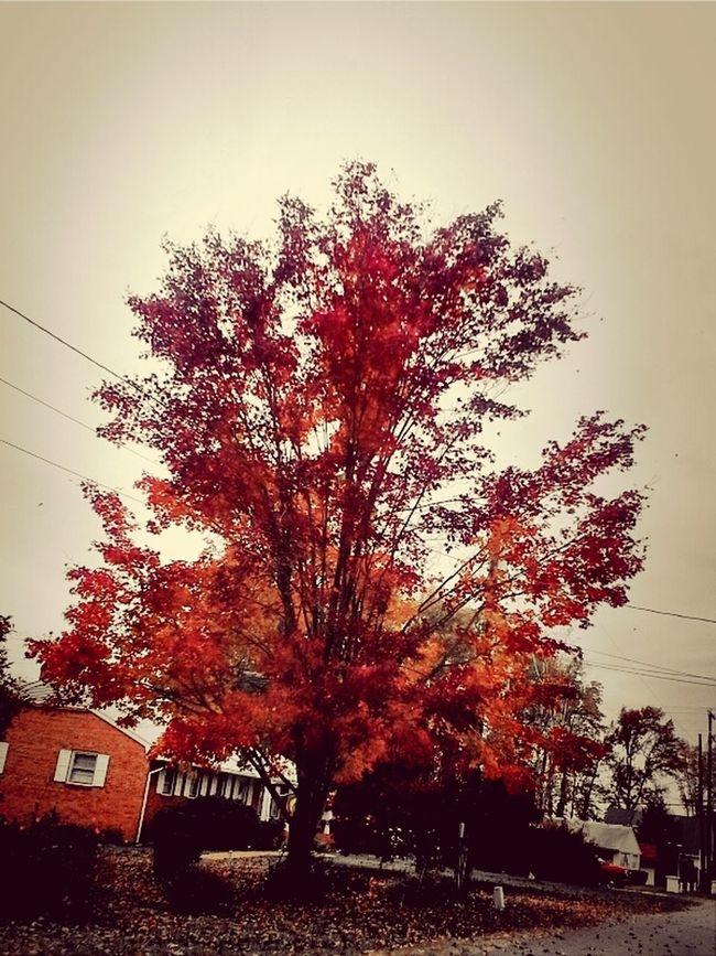Throughmyeyes Colors Of Autumn TreePorn