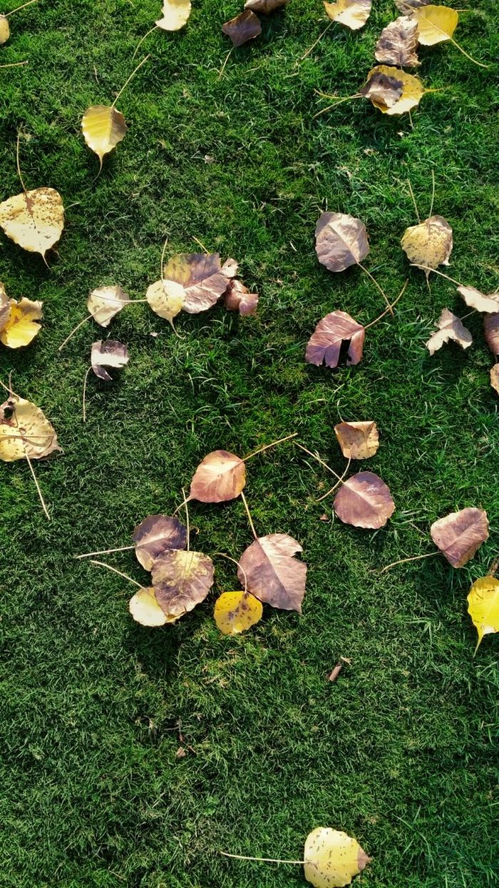 Texture.Grass Nature Day Outdoors High Angle View No People Field Growth Green Color Beauty In Nature Sunlight EyeEm Best Shots Full Length EyeEmNewHere Still Life Light Outdoor Outdoor Photography Leaf Leaves Texture Pattren Eyeemphotography Yellow Live For The Story