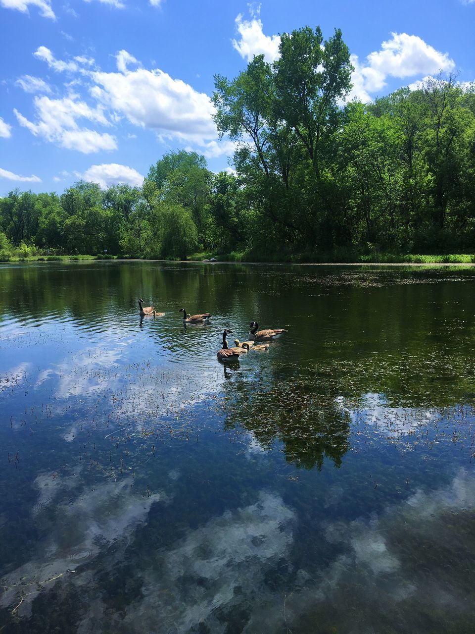 lake, water, nature, cloud - sky, tree, sky, reflection, day, beauty in nature, outdoors, tranquility, growth, scenics, swimming, animal themes, bird, no people