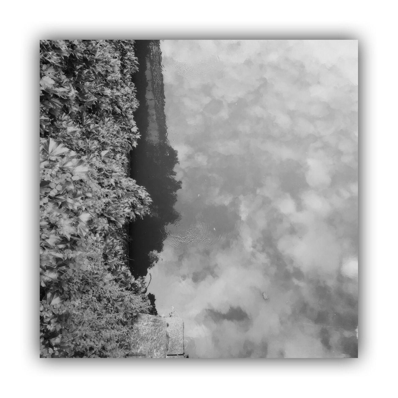 「川を橋の上から撮る。」 I Took The Rivers From On The Bridge River Bridge Blackandwhite Light And Shadow Monochrome Monochrome_life