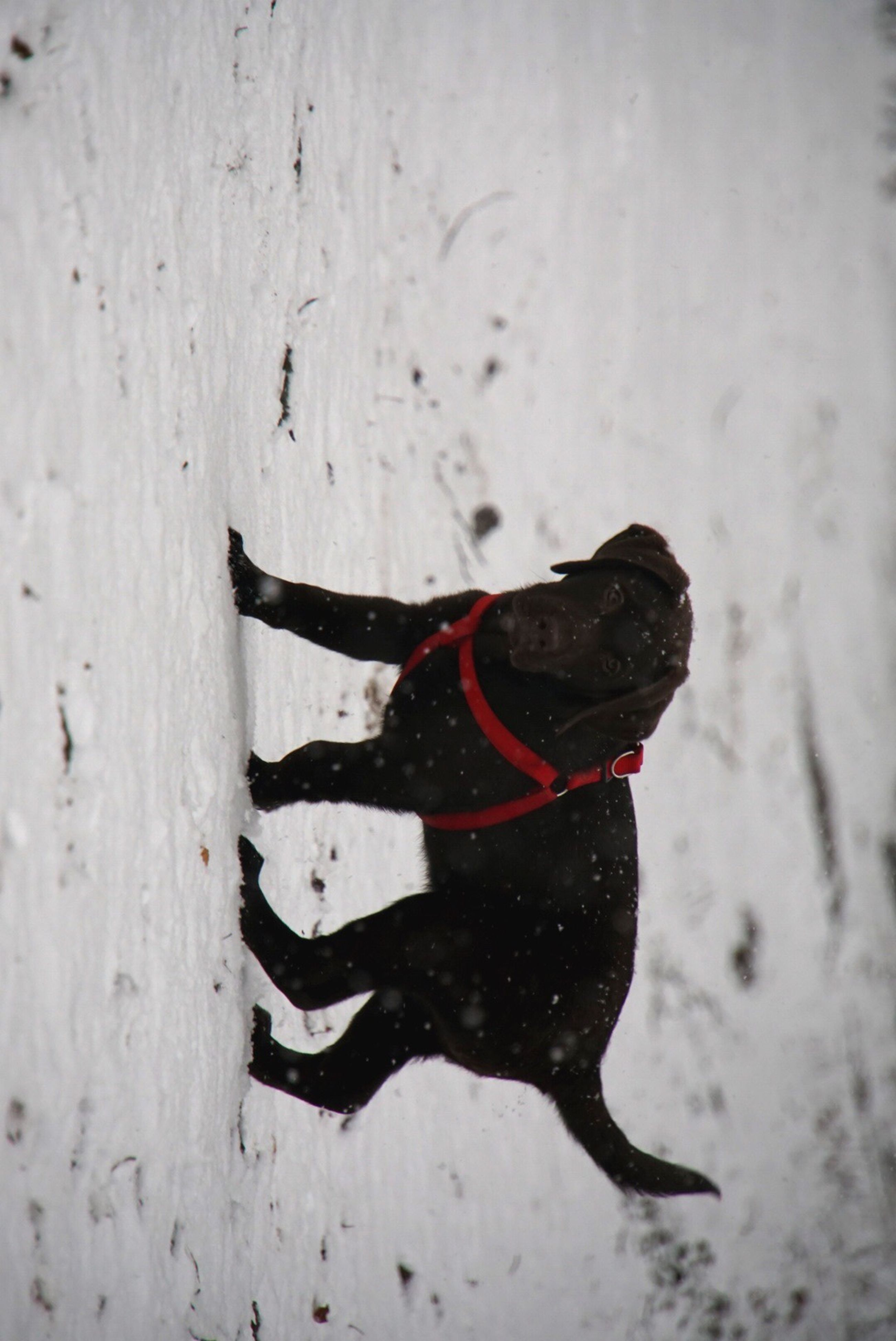 domestic animals, dog, one animal, pets, mammal, animal themes, black color, no people, day, outdoors, nature